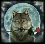 Gloomy Wolf